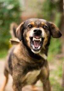 tenant's vicious dog